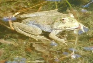 2016-07-24 grenouille